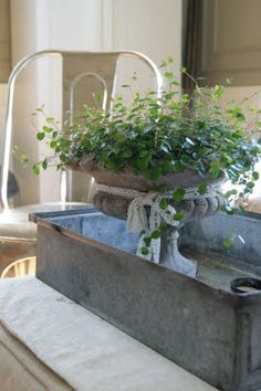 """Urns& Angel Vine...softness & vintage appeal...indoors in cooler weather...adds """"life"""" to a space....a zinc planter ....holding pots or forced bulbs...magnifies the effect...."""