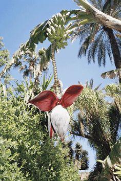 Yves Saint Laurent Garden Morocco Wilder Quarterly
