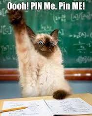 Resultado de imagen para funny cats