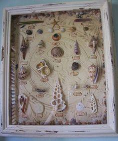 Sea Shell Shadow Box
