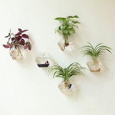 Mkono 2 Pack Wall Hanging Plant Terrarium Glass Planter--...