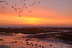 avondrood Holiday Travel, Holland, Fairy Tales, Places To Visit, Sea, Sunset, Nature, Outdoor, Google