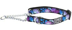 RC Pet Products Training Martingale Collar, Calypso >> Remarkable product available now. : Dog Training and Behavior Aids