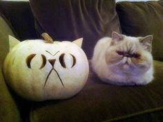 This cat (on the left) sitting with an exact copy of herself in pumpkin form (on the right).