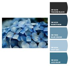 Colour inspiration blues
