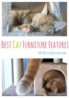 Best Cat Furniture Features That Will Have Your Cat Smiling From Ear to Ear!
