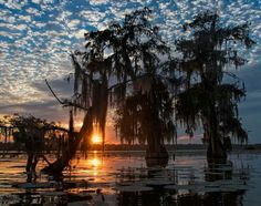 Lake Martin (Louisiana)