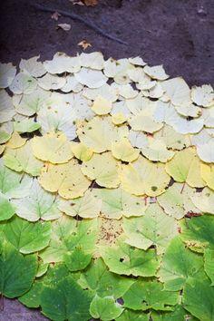 beautiful green leaves via Emerson Fry