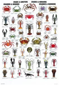 Crabs & Lobsters