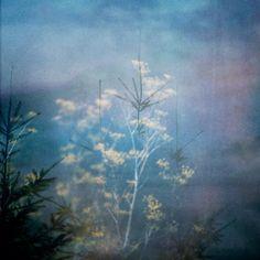 autumn in sweden Gaia, Sweden, Tokyo, Autumn, Bees, Butterflies, Flowers, Painting, Instagram