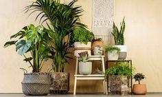 Plants NRF