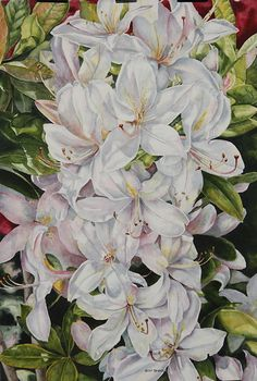 Helen Shideler - Work Zoom: Florabundance