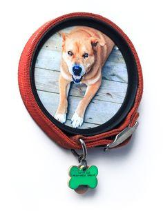 Collar Keepsake - A Photo Frame for Your Pet's Collar by Kent Ambler — Kickstarter