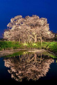 東京カメラ部 Editor's Choice:Junji Higashi