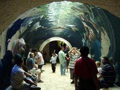 Dallas World Aquarium    My favorite Aquarium in Texas