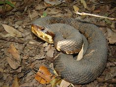12 Best Snakes Images Snake Snakes Animals