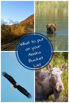 I absolutely love living in Alaska. Life here is an adventure and I wanted to share with you some things you should consider putting on your Alaska bucket list! Alaska Salmon, Living In Alaska, Alaska Cruise, Make Time, Travel Destinations, Travel Tips, Family Travel, Travel Inspiration, Cool Photos