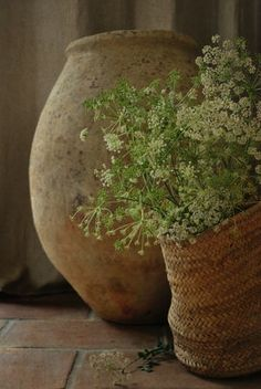 white Queen Anne's Lace in wicker basket, with terra cotta pot. Love Flowers, White Flowers, Beautiful Flowers, Queen Anne Lace, Pot Jardin, Terracota, Deco Floral, French Country House, Country Living