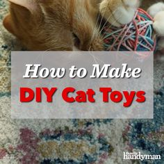 "If you're wondering, ""How do I make my own cat toys?"" We've got four simple DIY homemade cat toy ideas for you. Diy Cat Tower, Kitten Beds, Homemade Cat Toys, Cat Hacks, Cat Playground, Cat Room, Diy Stuffed Animals, Pet Toys, Pets"