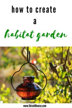Create a wildlife friendly yard with birdhouses, feeders, native plants, water, and a butterfly garden. Don't forget to collision-proof your windows and keep domestic cats indoors to protect native birds. Butterfly Plants, Plant Diseases, Hummingbird Garden, Living Off The Land, Planting Bulbs, Garden Pests, Gardening For Beginners, Container Plants, Native Plants