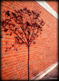 tree shadow https://www.facebook.com/Elle.Ann.Art