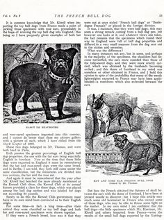 Origins of the French Bulldog