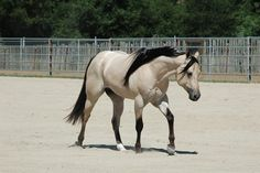 News - Redheart Appaloosa Stud All The Pretty Horses, Beautiful Horses, American Quarter Horse, Quarter Horses, Horse Coat Colors, N Animals, Horse World, Equine Photography, Horse Pictures
