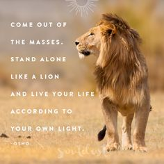 Stand alone like a lion and live your life according to your own light. - Osho