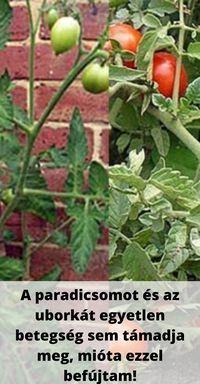 Home Vegetable Garden, Tomato Garden, Home And Garden, Organic Vegetables, Garden Paths, Horticulture, Organic Gardening, Home Crafts, Pergola