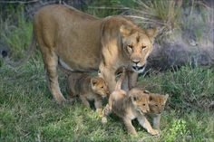 Mother with cubs by Elmar Weiss on 500px