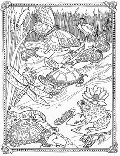 Pond Animals Coloring Pages. 20 Pond Animals Coloring Pages. Jan Brett Free Mossy Coloring Page Lily Pad Pond so Animal Coloring Pages, Coloring Book Pages, Printable Coloring Pages, Turtle Coloring Pages, Summer Coloring Pages, Kids Coloring, Mandala Coloring, Pond Animals, Spring Books