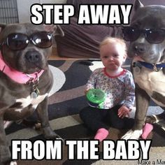 Pitbull and babies Animals And Pets, Baby Animals, Funny Animals, Cute Animals, Animal Funnies, Animal Memes, Cute Puppies, Cute Dogs, Dogs And Puppies