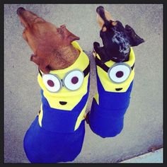 Dachshund Bogey and Remy as Minions