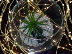 Terrarium Kit With Large Air Plant / Desert by decorateyourroom, $32.00