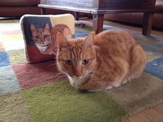 Personalized Needle Felted Pet Pillows Taking NO by ValsArtStudio