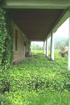 Nature taking back this porch in Chapman, Kentucky. via New Moon Cottage