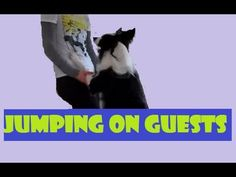 NO JUMPING! How To Get Your Dog To STOP Jumping On People - FASTEST Way - YouTube