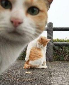 My cat photo bomb I Love Cats, Cute Cats, Funny Cats, Funny Animals, Cute Animals, Crazy Cat Lady, Crazy Cats, Photoshop Fails, Matou