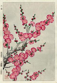 Plum Blossoms, Pink  by Kawarazaki Shodo, 1954  (published by Unsodo)