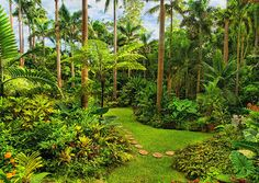 Hunte's Gardens - Barbados, West Indies, Caribbean Islands.