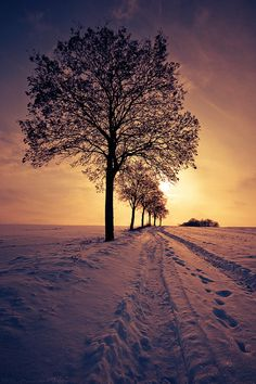 Love the purple snow colour caused by the light of the sun & the darkness of the sky.