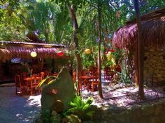 """El Jardin Restaurant-Garden setting, good food and good prices! El Jardin Restaurant is new in Playa Del Carmen and alreadyoff toa good start. They lovingly refer to it as """"Yucacheca cuisine"""" because the Yucatecan chef and one of the owners who happens to be a chef as well is Czech. They have a good fusion of taste. Here are some things we like: Good central location in a lovely tropical garden. Yucatecan chef from Izamal that is very good. Good prices Good taste Classical music in the…"""