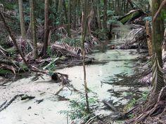 Wanggoolba Creek flows through the rainforest in the center of Fraser Island, South Queensland, Australia. Fraser Island, Queensland Australia, Cairns, Brisbane