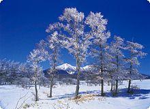 八ヶ岳の冬:樹氷