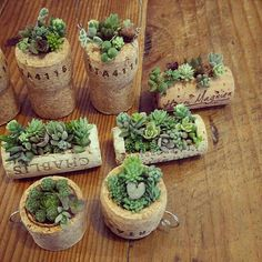 Succulent Planter Diy, Succulent Gardening, Diy Planters, Wine Craft, Wine Cork Crafts, Suculentas Diy, Garden Crafts, Garden Projects, Wine Cork Art