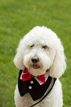 Image result for dogs in wine country weddings