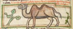Animal detail from medieval illuminated manuscript, British Library Harley MS Medieval Manuscript, Illuminated Manuscript, Bayeux Tapestry, Camels, British Library, Fantasy Creatures, Animal Pictures, Celtic, Ms
