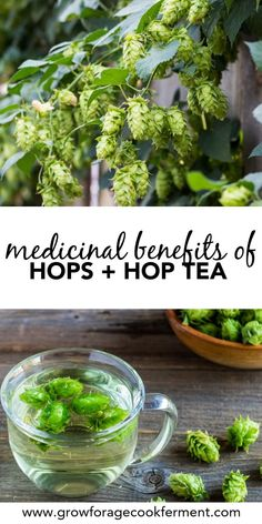Hop Tea Hops have many health benefits and are perfect for adding to your herbal apothecary! Learn about the medicinal benefits of hops and how to make hop tea. Cold Home Remedies, Natural Health Remedies, Herbal Remedies, Natural Cures, Natural Foods, Natural Dandruff Remedy, Sleep Remedies, Healing Herbs, Medicinal Herbs