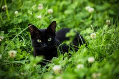 """Black Cat in the Green"""