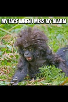 Laughed so hard not gonna lie! This is what my little sis looks like when she wakes up!